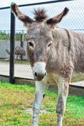Donkey closeup portrait Stock Photos