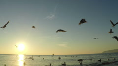 SLOW motion, Seagull Birds flying and fishing in the sea. Stock Footage