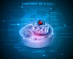 Cell structure - stock illustration