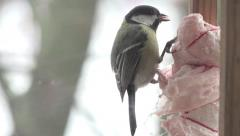 Bird Titmouse close up sitting in manger and biting pieces of bacon, fog, 4k Stock Footage