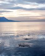Sunset behind Geneva lake Kuvituskuvat