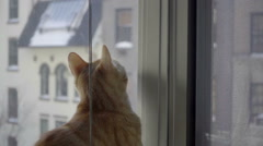 Cat standing up on window sill - orange tabby curious about outside NYC Stock Footage