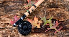 Fly fishing reel on wet old weathered tree and autumn leaves - stock photo
