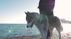 Young woman staying and looking around with siberian husky on sea pier, 4k - stock footage