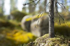 Sunny forest in Scandinavia Stock Photos