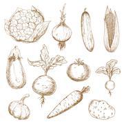 Fresh vegetables hand drawn sketches - stock illustration
