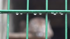 Metal fence with raindrops, a cougar is not in focus, zoo, rain, fog Stock Footage