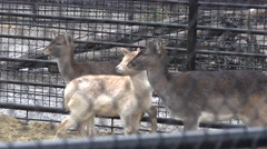Young deer in a pen, in captivity, zoo, rain, fog Stock Footage