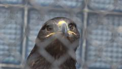 Head of an eagle behind bars, fence out of focus, the zoo, Nikolaev, Ukraine Stock Footage