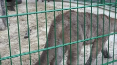 Two lynx walking restlessly around the cage, captivity, zoo, rain, fog Stock Footage