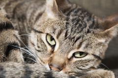 Tired Cranky Cat - stock photo