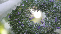 Closeup beautiful lilac wreath of flowers Stock Footage