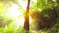 Bright Sunshine Glaring through Jungle Trees on a Nature Trail. Video 1920x10 - stock footage