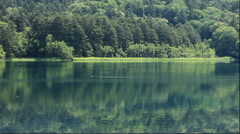 Ducks at Lake Onneto in Hokkaido, Japan Stock Footage