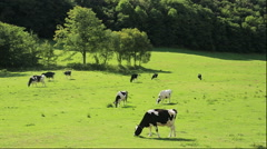 Cattle ranch in Hokkaido Stock Footage