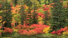 Autumn leaves at Takiminuma Pond at Kogen Onsen in the Daisetsuzan National Park Stock Footage