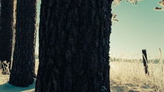 trunks of trees and the field, slider shot - stock footage