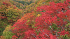Autumn leaves of Matsurube-Ohashi bridge, Iwate Prefecture, Japan Stock Footage
