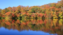 Autumn leaves at the Juniko Lakes in the Shirakami Sanchi World Heritage area in Stock Footage