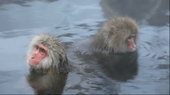 Japanese monkey taking a bath at the Jigokudani Hot Springs in Nagano Prefecture Stock Footage
