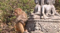 Monkey in Monkey Temple, Kathmandu, Nepal Stock Footage