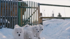 Puppies running in the snow Stock Footage
