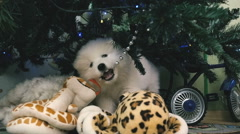 Puppy chewing Christmas toy Stock Footage