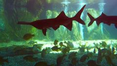 Assortment of Fascinating Fish in a Public Aquarium. Video 4k - stock footage