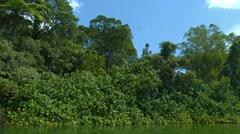 Dense, Tropical Vegetation along a River's Edge. Video 4k Stock Footage