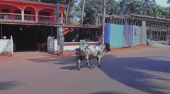 Cow walks in traffic on the road in India Stock Footage