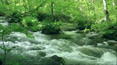 Oirase Gorge in Aomori Prefecture Stock Footage