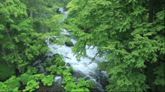 Fresh green at Akan River, Hokkaido, Japan Stock Footage
