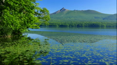 Least-water-lilies and Komagatake from Onuma Park in Hokkaido Stock Footage