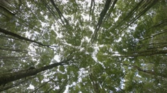 Rotating Shot of a Young Forest Canopy from Below. UltraHD video - stock footage