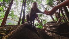 Female feeding monkey with a baby in Goa jungle Stock Footage