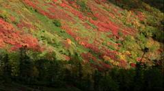 Autumn leaves near Ginsendai in the Daisetsuzan National Park in Hokkaido Stock Footage