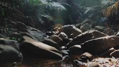 Jungles in India, North Goa - stock footage