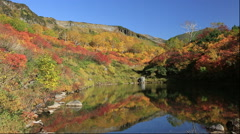 Autumn leaves at Kogen Onsen in the Daisetsuzan National Park in Hokkaido Stock Footage