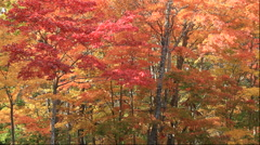 Autumn leaves at Onuma Park, Hokkaido, Japan Stock Footage