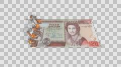 Belize money banknote burn on fire - stock footage