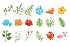 Traditional and tropical flowers - stock illustration
