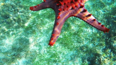 Starfish on the sandy bottom Stock Footage