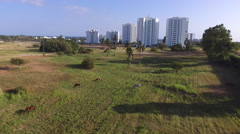 Flyover Horses in Field to Playa Blanca Beach Front Panama Stock Footage
