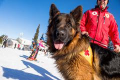 Rescue dog at Mountain Rescue Service at Bulgarian Red Cross is cheering duri - stock photo