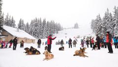Mountain Rescue Service dogs at Bulgarian Red Cross demonstrate their skills  Stock Photos