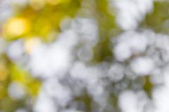 Abstract green bokeh nature background - stock photo
