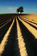 Agricultural landscape, fields, chapel, tree - stock photo
