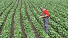 Agriculture, farmer in soybean field, zoom in Stock Footage