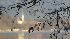 Bled town seen through the branches of a tree Stock Footage