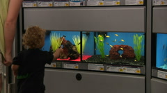 Little Boy Looking At Fish In Pet Store Stock Footage